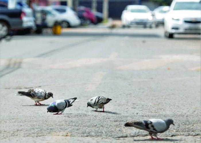 Aprenda como evitar as pragas urbanas e se proteger