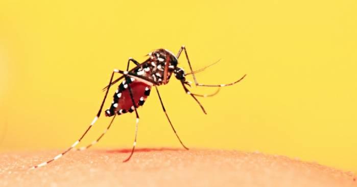 País registra 164 mortes por febre amarela desde julho