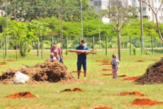 Arborização para proteger as abelhas do cerrado