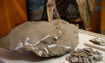 Cientistas esclarecem origem dos pterossauros