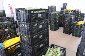 Nutrição para 36 mil pessoas em situação de vulnerabilidade