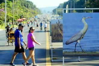 Evento no Eixão Norte abre a Semana do Meio Ambiente