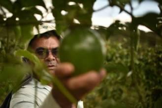 Merenda escolar terá produtos de agricultores familiares