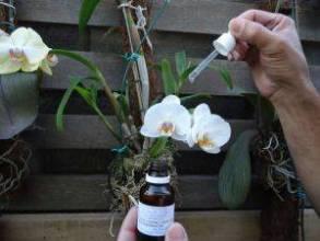 Alergias, depressão, câncer e outros podem ser tratados com homeopatia